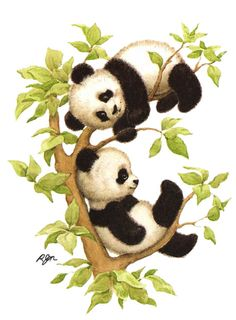 130 Best Pandas Images On Pinterest