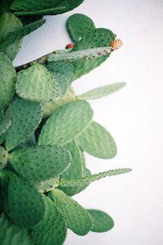 ladybug cactus.