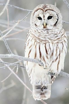 beautiful owl..........