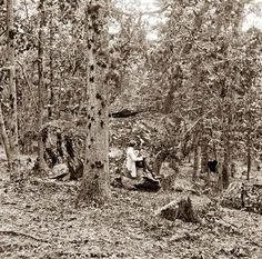 Culp's Hill, Gettysburg, showing damaged trees.