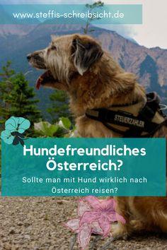 Sollte man wirklich mit seinem Hund nach Österreich in den Urlaub fahren? Wie hundefreundlich ist das Land wirklich? Das alles erfährst du hier! Freundlich, Dogs, Animals, Vacation, Pet Dogs, Viajes, Animales, Animaux, Doggies