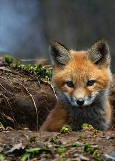I've been seeing a little fox running around our place lately. They are truly beautiful.