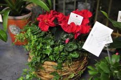 Holiday Garden Gift Basket with Winter Rose Red Poinsettias as the feature #holidays #Christmas #poinsettias