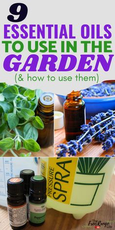 Did you know you can use essential oils to help your garden grow better? Learn how to use essential oils for gardening plus recipes to get you started! Oregano Essential Oil, Cinnamon Essential Oil, Cinnamon Oil, Orange Essential Oil, Tea Tree Essential Oil, Best Essential Oils, Garden Insects, Garden Pests, Herbs Garden