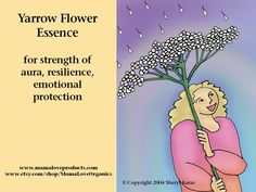 Yarrow Flower Essence, 1 or 2 oz Dropper or Spray Aura Mist, Self-care for Emotional Protection and Resilience, Strength of Aura Star Flower, My Flower, Angelica Flower, Holistic Remedies, Homeopathic Remedies, Bach Flowers, Wounded Healer, Columbine Flower, Meditation Benefits