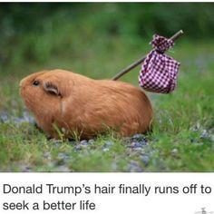 Donald Trumpin tukka paremman elämän perässä