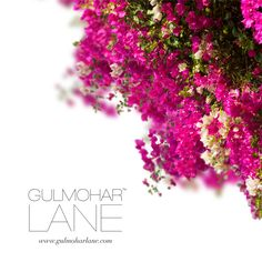 Show us some love. Visit us at http://www.gulmoharlane.com/