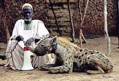 Man with hyena.