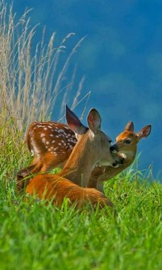 Doe and fawn.bambi lives in my front yard. Animals And Pets, Baby Animals, Cute Animals, Wild Animals, Beautiful Creatures, Animals Beautiful, Beautiful Beautiful, Beautiful Scenery, Tier Fotos