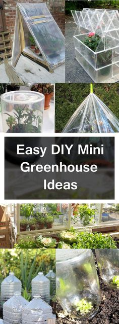 DIY  mini greenhouse Ideas http://livedan330.com/2015/11/15/diy-mini-greenhouse-ideas/