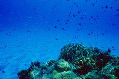 Little fish, big sea  #Okinawa