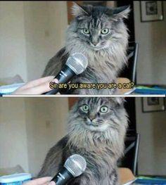 This cat looks so surprised