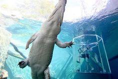 #austrália #viagem #roadtrip #trabalho #crocodilos #selvagem