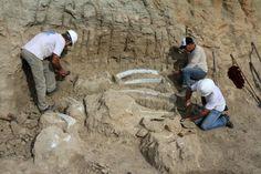 Fósseis de dinossauro encontrados em canteiro de obras são apresentados em Uberaba Segundo pesquisadores da UFTM, tudo indica que o achado, ainda preso a rochas sedimentares, seja um dinossauro da família dos Titanossauros, espécie que viveu há pelo menos 66 milhões de anos