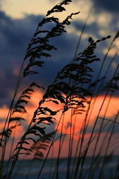 sea oats – Sand between Your Toes Great Pictures, Nature Pictures, Beautiful Pictures, Sunset Sea, Sky View, Beach Trip, Sunrise, Beautiful Places, Scenery