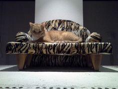 Kissan sohva