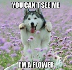 You cant see me Im a flower!