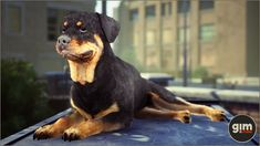 Unreal Engine, Rottweiler, Game Art, Animation, Studio, Digital, Dogs, Nature, Animals