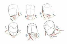 Drawing Heads, Body Drawing, Anatomy Drawing, Drawing Base, Figure Drawing, Head Anatomy, Drawing Techniques, Drawing Tutorials, Art Tutorials