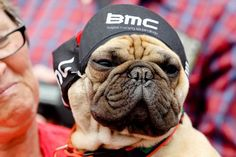 BMC Bulldog