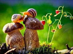 The Most Amazing Up-Close Snail Photos You'll Ever See. Can I be a snail? Nature Animals, Animals And Pets, Baby Animals, Cute Animals, Pretty Animals, Funny Animals, Macro Photography, Animal Photography, Stunning Photography