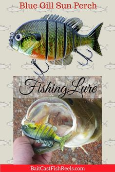 Blue Gill Sun Perch Bass Fishing Lure for fishermen and women! - Bait Cast -and- Fish Reels