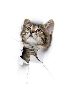 Cats, Shirt, Manualidades, Animaux, Drawing Drawing, Gatos, Dress Shirt, Shirts, Cat