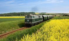 Mit dem Reblaus Express durch Niederösterreich | 1000things.at Stuff To Do, Things To Do, Vienna, Austria, Train, Japan, Beautiful, Bike Trails, National Forest