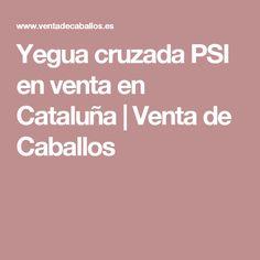Yegua cruzada PSI en venta en Cataluña | Venta de Caballos