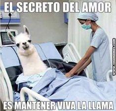 memes-amor-chistosos Animal Jokes, Funny Animal Memes, Funny Animals, Funny Jokes, Hilarious, Mom Funny, Memes In Real Life, Spanish Humor, New Memes