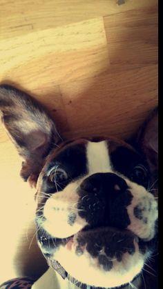 My dog!