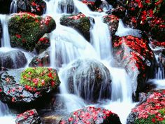 Waterfalls Kyoto Japan Photographic Print by Green Light Collection at Art.com