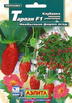 Maasikas ampelne F1 ''Tarpan'' Fragaria vesca
