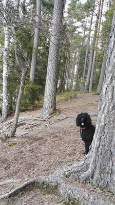 Blogi  OMAISAPU.fi      : Kuuntele katsele luonto eläimet kertoo