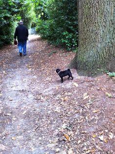 Kleine Mopsie in het bos in Maldegem
