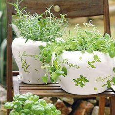 Netradičné kvetináče pre vaše bylinky