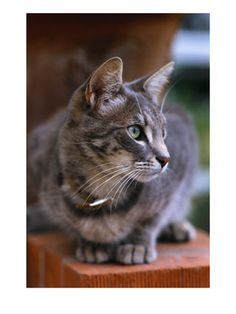 COPING WITH DEATH OF PET: Understanding Pet Loss Grief. It is perfectly understandable for you to have questions or be experiencing a serious grief over the death of your beloved pet. Pet Loss Grief, Paul Gray, Grey Cats, My Animal, Happy Life, Death, Kitty, This Or That Questions, Bereavement
