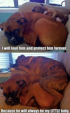 They look just like my dogs!