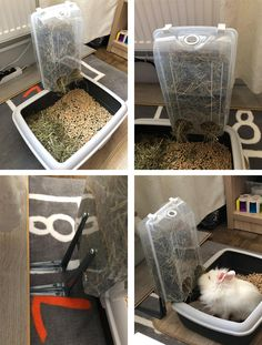 Diy Hay Feeder, Rabbit Breeds, Bunny Care, Rabbits, Bunnies, Pets, House, Animals, Inspiration