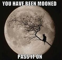 You Have Been Mooned