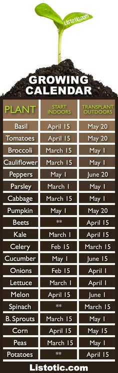 Plant Your Vegetable Garden ⋆ Listotic Vegetable garden growing calendar with starting and transplanting dates. If only I had a green thumb.Vegetable garden growing calendar with starting and transplanting dates. If only I had a green thumb. Veg Garden, Garden Types, Lawn And Garden, Terrace Garden, Veggie Gardens, Vegetables Garden, When To Plant Vegetables, Beginner Vegetable Garden, Potager Garden