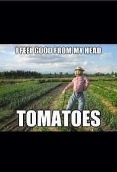 From my head tomatoes