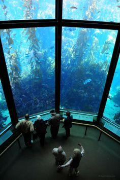 Monterey Bay Aquarium, California, USA