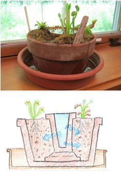 Bog Garden -- http://www.instructables.com/id/Bog-Garden-For-Carnivorous-Plants/