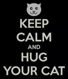 Hug a cat!!