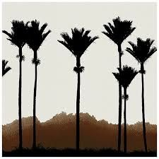 Peter Latham collection of fine art landscape photography Kiwiana, Palm Trees, Landscape Photography, Fine Art Prints, Around The Worlds, Carving, Stenciling, Painting, Silhouettes