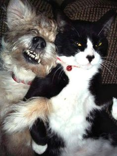 """""""We had so good times and some bad times but we will always be together buddy!"""" Cute...Cat and Dog."""