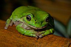 Cute lil frog....