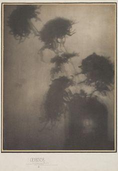 "The Shadows on the Wall. ""Chrysanthemums"" Adolf de Meyer, ca 1906"