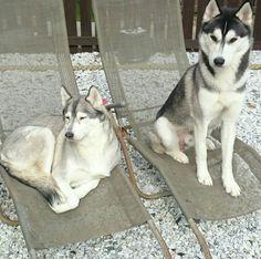 Keira & noosa